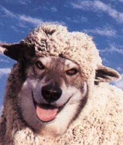 wolves_in_sheeps_clothing