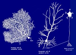 neuron mix-sm