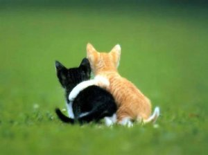 hugging_kittens1