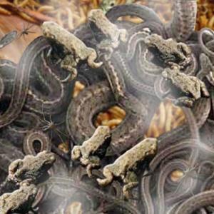 Swedenborg's Creepy Crawlers2