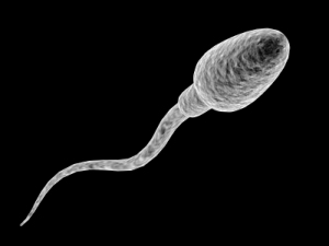 human-sperm