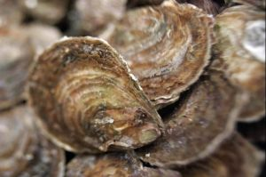 two-oysters